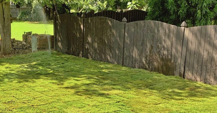 How Much does it cost to Have Sod Installed?