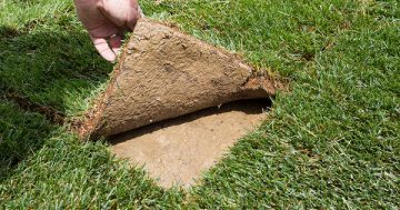 How to Water New Sod