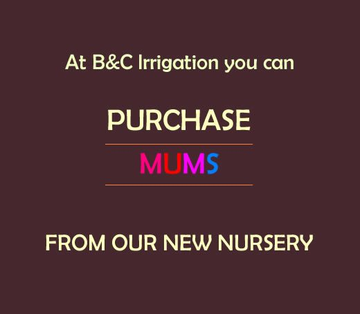 Purchase Mums Sign