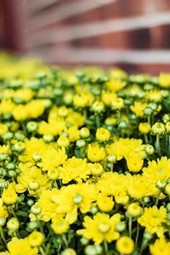 flowers for sale huntsville al